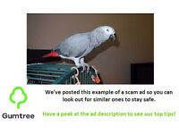 male african grey free to good home -- Read description before replying!!!