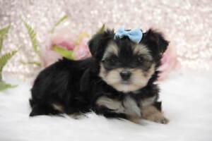 Adopt Dogs & Puppies Locally in New Brunswick | Pets | Kijiji