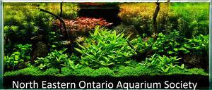 North eastern Ontario aquarium society