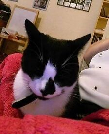Black and White cat lost outside White Cross Vets.Roscoe doesn't know the are as we live in waterloo