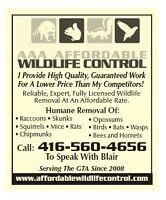 Affordable Wildlife Control Squirrel & Raccoon Removal Toronto