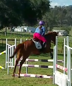 Thoroughbred Mare For Sale Tamworth Tamworth City Preview