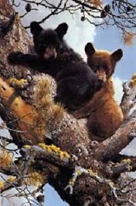 High Adventure Black Bears by Carl Brenders