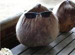 Wilson Coconut