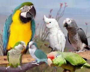 Wanted all unwanted birds welling to pay a small price for them Narre Warren South Casey Area Preview