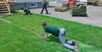 Installation de tourbe 1 $ le p2 (incluant le gazon et top soil)