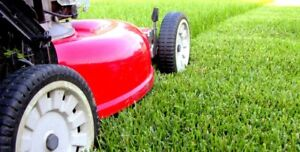 Lawn maintenance in Scarborough