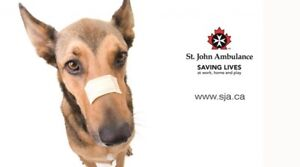 Learn Pet First Aid with St. John Ambulance
