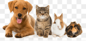 Pet nail trims(in-home)