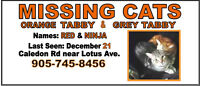 Help needed with Missing Cat posters