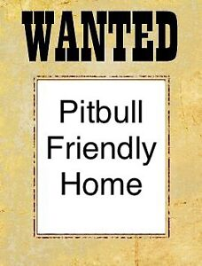 ISO: student looking for a pitbull welcoming home