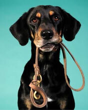 Dog Walking In Bonner Bonner Gungahlin Area Preview