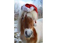 Equestrian Xmas table-top sale