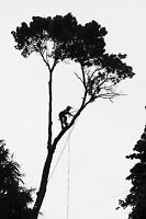 Tree Removal and Yard Service