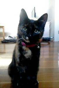 REWARD FOR LOST CAT AIRPORT WEST Airport West Moonee Valley Preview