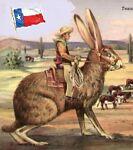 Texasproudrabbit Collectibles&More