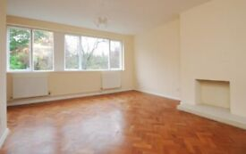 * Great 3x bedroom flat available to rent in central Herne Hill SE24 *