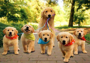 Wagging tails dog walking services
