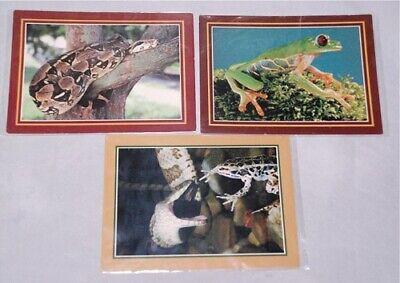 """3 Reptile Postcards Boa Constrictor J2,Tree Frog C371 Snake Frog WR3 LARGE 6""""X8"""""""