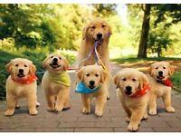Pet walking £4 per half hour £7 full hour *