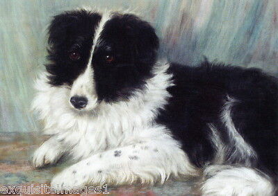 1871 Art~Very Sweet Border Collie Puppy Dog~NEW Large Note Cards
