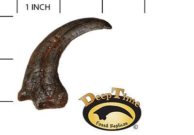 Dromaeosaur Hand Claw - Cast Replica, Dinosaur Claw (SN2)