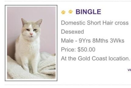 Senior Cat Needs A Nice Home Coombabah Gold Coast North Preview