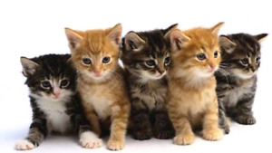 NEEDED - kitten food donations