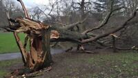 Chainsaw Services - Looking For Logs