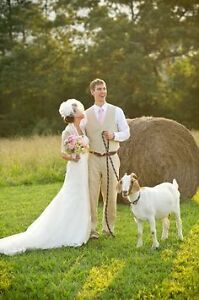 WANTED- friendly goat/lamb for pictures@ wedding
