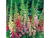 Horticultural & Landscape Services
