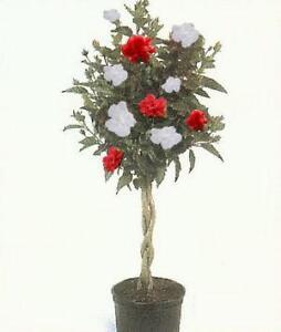 Rose Of Sharon Flowers Trees Plants Ebay