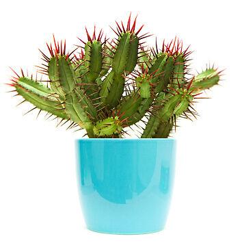Pflanzen für besondere Bodenverhältnisse: So kultivieren Sie Kakteen & Sukkulenten erfolgreich
