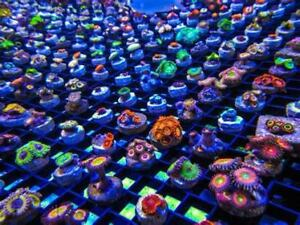 $10 easy to keep colorful salt water corals and frags