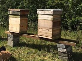 Honey bees in double national beehives for sale