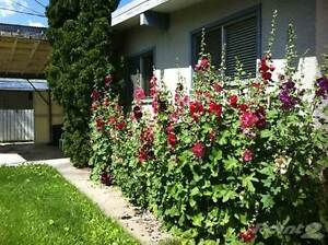 Homes for Sale in Vegreville, Alberta $249,950 Strathcona County Edmonton Area image 5
