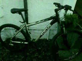 Focus mountain bike