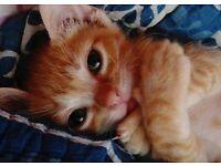 Kittens For sale [ Various ]