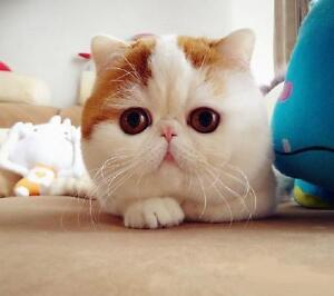 want an lovely cat