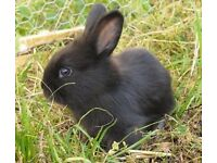 Gorgeous baby rabbits for sale