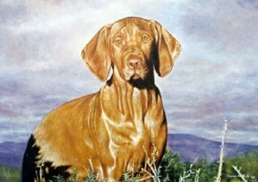 Vizsla Limited Edition Art Print Open Country by Steven Nesbitt*