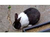 X2 RABBITS FOR SALE