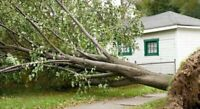 Tree,Garbage ,  and Junk Removal ( 663-5590 )