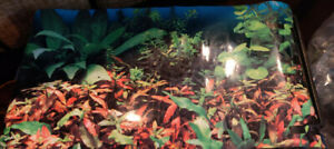 Selling Fish tank with accessories
