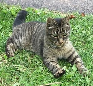 Found! Female Cat in Valley Area