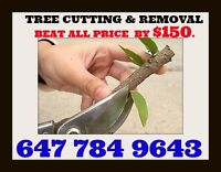 rofessional tree cutting and removal best price. Stump service