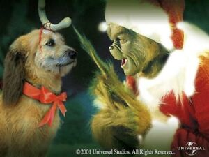Home for Christmas? Even the Grinch had a dog
