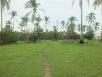 Titled land Panama 2000m2. Only 350m from beach!