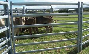 CATTLE FENCE PANEL YARD LIVESTOCK PANEL CATTLE GATE Kewdale Belmont Area Preview