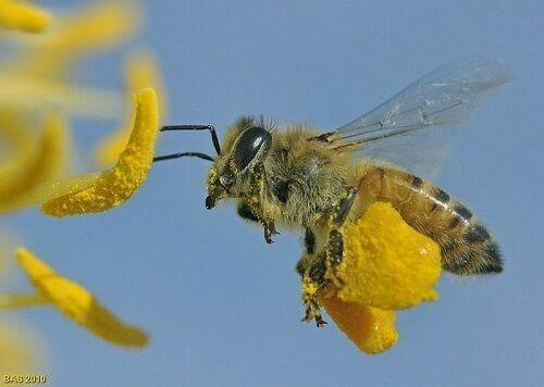 Krupacare  BEE POLLEN GRANULES Fresh Pure 100% Natural Raw Flower 4, 8 Oz 1 lb 4